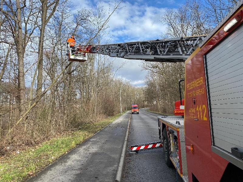 H1 - Ast/Baum droht zu fallen Verkehrsweg